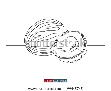continuous line drawing coconut template your stock vector royalty
