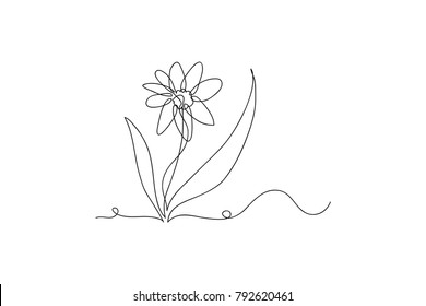continuous line drawing of natural flowers vector illustration