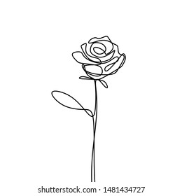 continuous line drawing of rose flower minimalism design isolated on white background