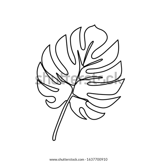 Continuous Line Monstera Leaf Tropical Leaves Stock Vector Royalty Free 1637700910 Seamless background with green leaves. https www shutterstock com image vector continuous line monstera leaf tropical leaves 1637700910