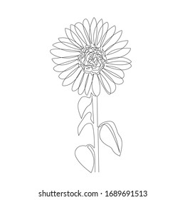 Continuous One Line Drawing. Sunflower Contour Abstract Illustration. Simple One Line Plant Drawing. Botanical Nordic Sketch. Vector EPS 10.