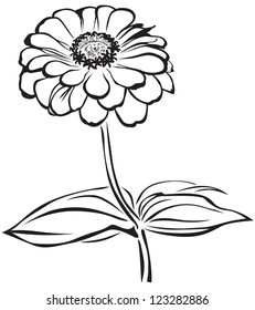 The contour black-and-white image of a flower zinnia