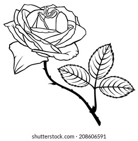 Contour black-and-white image rose flower