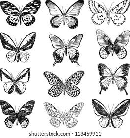 contour butterflies