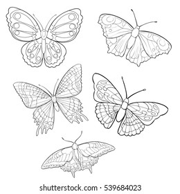 contour butterfly icons in graphic style