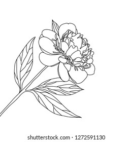 The contour of a flowering peony. Poppy flower graphic black white isolated sketch illustration vector
