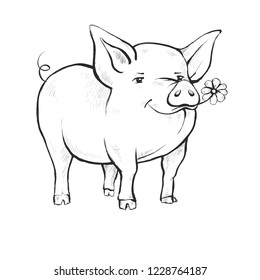 Contour Line Drawing. Coloring for kids. A pig is standing. Cute funny animal eating chamomile flower. Hand-drawn. Cartoon.
