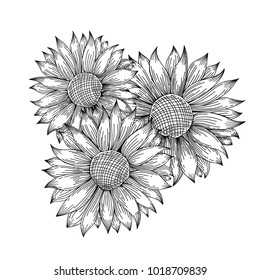 Contour pattern of sunflower. Vector illustration. Hand drawn flowers.
