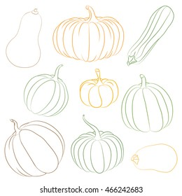 Contour of pumpkins and squashes.