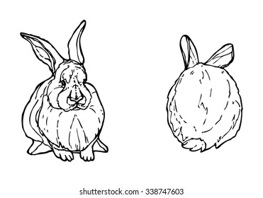 Contour rabbit ink drawing. Front and back view of sitting hare. Vector bunny