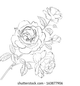 Contour of rose isolated over white. Vector illustration
