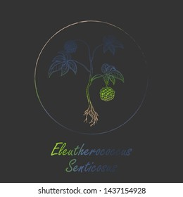 Contour Siberian Ginseng Made with Vibrant Gradient Placed in Round Brush  Frame. Eleutherococcus Senticosus Latin Name Colored with Gradient. Dark Grey Background. Label for Traditional Medicine