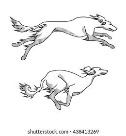 Contour vector image of running dogs saluki breed, two poses, with shadows