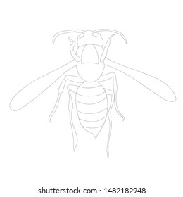 contour wasp, bee, on a white background