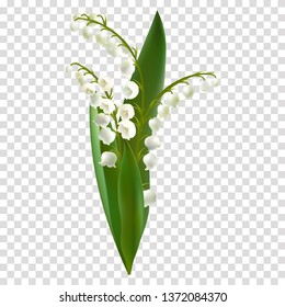 Convallaria majalis - Lilly of the valley. Hand drawn vector illustration of a bouquet of white spring flowers and lush foliage