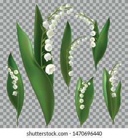Convallaria majalis - Lilly of the valley. Hand drawn vector illustration of a bouquet. Spring Flower.