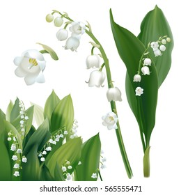 Convallaria majalis - Lilly of the valley. Hand drawn vector illustration of white spring flowers and lush foliage on white background.