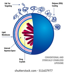 Conventional and Sterically-Stabilized Liposome. Medical vector illustration of liposomes drug delivery system