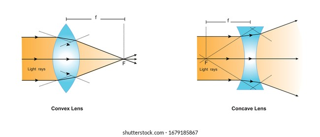 A convex lens or converging lens focuses the light rays to a specific point whereas a concave lens or diverging lens diverges the light rays.