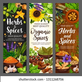 Cooking spices seasonings and culinary herbs banners. Vector organic natural herbal flavorings bay leaf, turmeric curry or parsley and dill, lavender or garlic with pepper and horseradish or nutmeg
