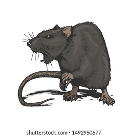 cool aggressive angry rat comic style illustration