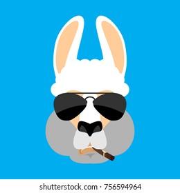 Cool Lama Alpaca serious face avatar. Animal smoking cigar emoji. Beast strict. Vector illustration