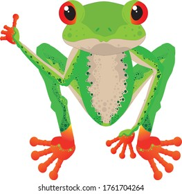 cool in red-eyed tree frog with right hand