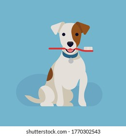 Cool vector flat design on canine teeth health. Dog dental health concept illustration with happy jack russell dog holding a toothbrush