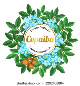 Copaiba Copaifera Langsdorffii plant vector illustration. Anti-inflammatory herbs. Hand drawn vector set of medicinal plants isolated on white background.