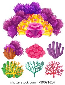 Coral reef on white background illustration