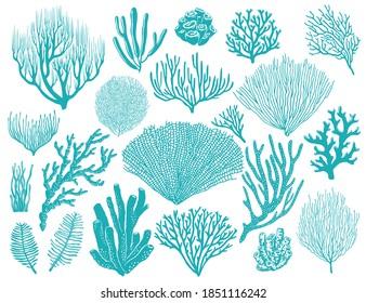Coral reef or seaweeds vector underwater plants. Aquarium, ocean and undersea algae water life isolated on white background. Corals or sea weeds and wracks, laminaria, kelp cartoon marine icons set