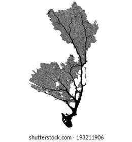 Coral Sea Fan B Vector Silhouette
