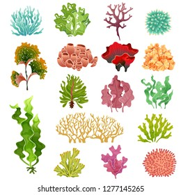 Coral and seaweed. Underwater flora, sea water seaweeds aquarium kelp and corals. Ocean plants vector illustration set