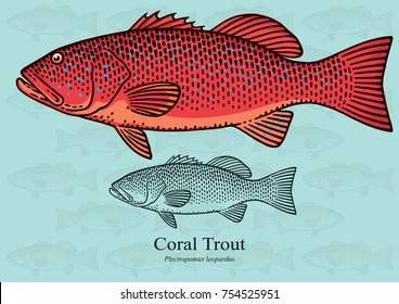 Coral Trout. Vector illustration with refined details and optimized stroke that allows the image to be used in small sizes (in packaging design, decoration, educational graphics, etc.)