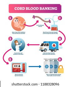 Cord blood banking infographic vector illustration. Diagram with baby attached to cord and placenta, blood drawn into collection bag, delivery, examination and storage.