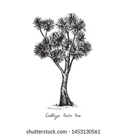 Cordyline australis (cabbage tree, cabbage-palm) tree silhouette, hand drawn gravure style, vector sketch illustration with inscription