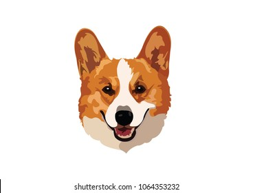 corgi cute purebred dog