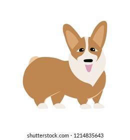 Corgi dog isolated om white background,happy  colorful pet icon,vector with Welsh Corgi Cardigan
