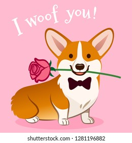 Corgi dog with rose flower in mouth Valentine's day card vector cartoon. Cute sitting corgi puppy on pink background. Funny humorous love, pets, animals, Valentine's day theme design element.