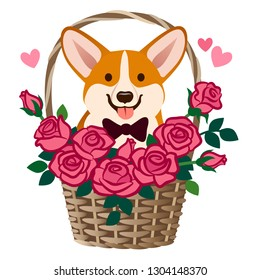 Corgi dog sitting in a basket of roses vector cartoon illustration. Funny cute humorous love, friendship, dating, romance, birthday, Valentine's day celebration, pet lovers, children greeting cards.