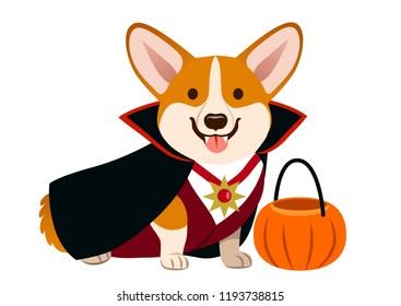 Corgi dog wearing vampire Halloween costume with black cape, fangs, white shirt and dark red vest, with pumpkin trick or treat bucket. Cute happy corgi puppy sitting and smiling with tongue out.