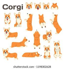 corgi illustration,dog poses,dog breed