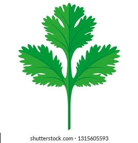 Coriander or Cilantro Leaf vector flat graphic illustration, fully adjustable and scalable. Cut herb leaves.
