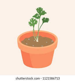 coriander Growing up in flowerpot