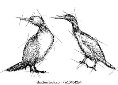 Cormorant  Vector Pen Drawing