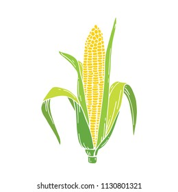 Corn cob hand drawn vector illustration. Detailed vegetarian food drawing. Farm market product.