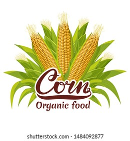 Corn cob organic food illustration for package logo. Drawn color botanical isolated stock vector image.