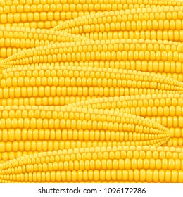 Corn cob. Organic food pattern. Corncob natural meal. Ripe Maize. Product for cooking popcorn. Healthy eating. Vegetable. Realistic foodstuff.  EPS10 vector illustration.