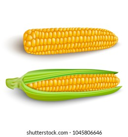Corn cobs on white background. Vector set.