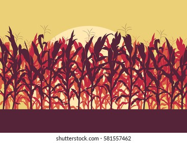 Corn field evening or morning light landscape vector background